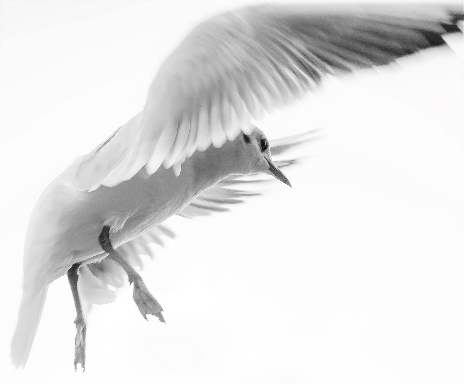 Vogel fliegt